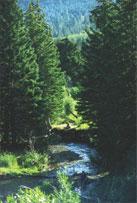 poetical nature scene
